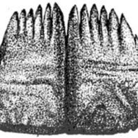 Elk Rib Comb
